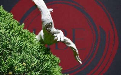 Ube bonsái Convención