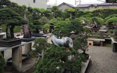 Viaje a Japón 2016 Tercera Parte (El Jardín de Kimura)