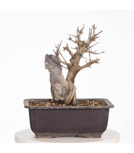 Granado Nejikan 17M015