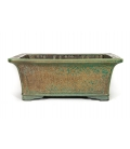 Bonsai Pot Koyo Used