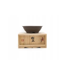 Maceta de bonsai Saito Shigeishizo