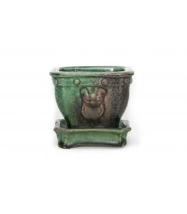 Bonsai usato Heian Kosen vaso
